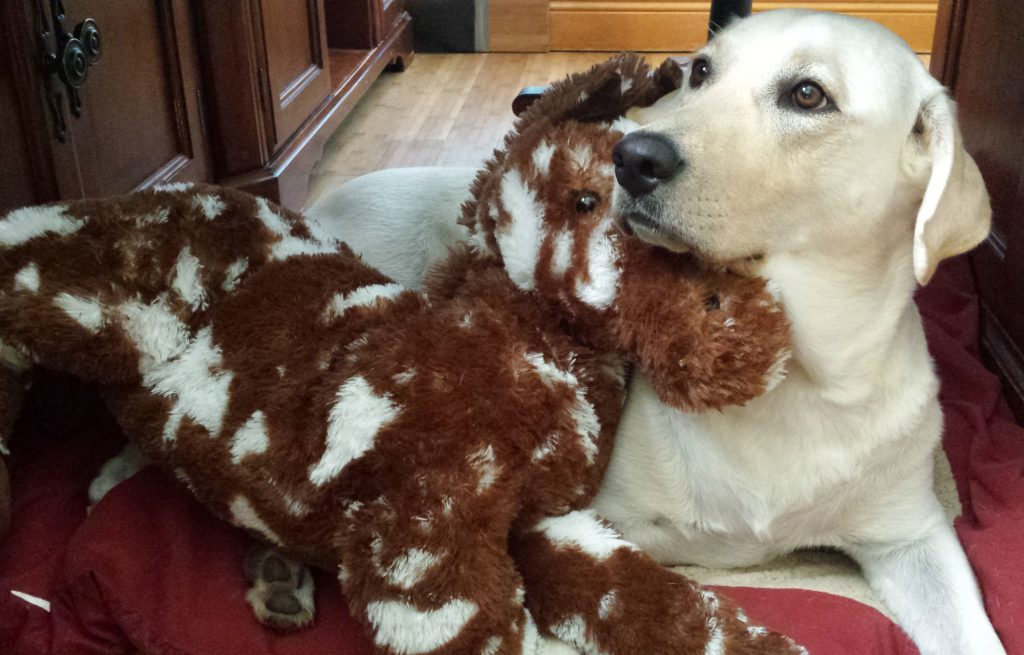 madison-and-pony