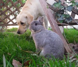 Madison and Cassey the Bunny in the grass.