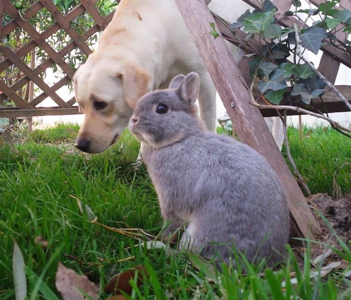 In the Bunny Garden