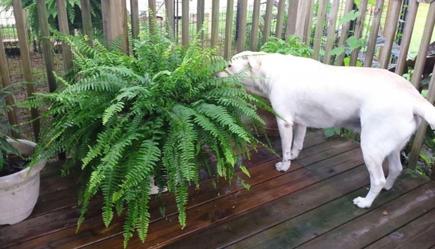 dinosaur plant 3