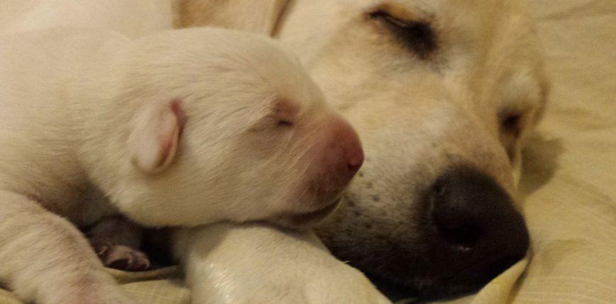 My Puppies!